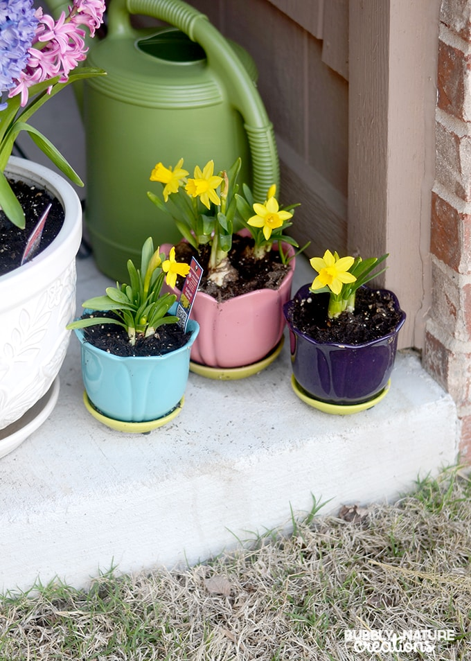 Outdoor Spring Flowers Daffodils #ZepSocialstars #ad